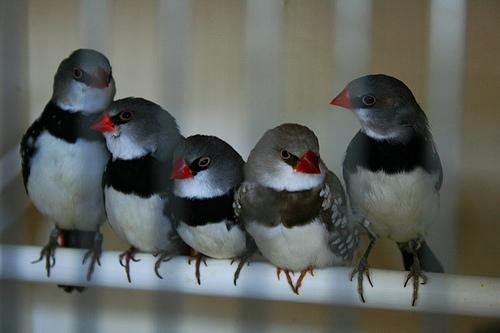 Oiseaux en famille